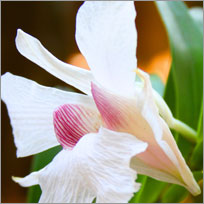 Orchid Flower Care Tips